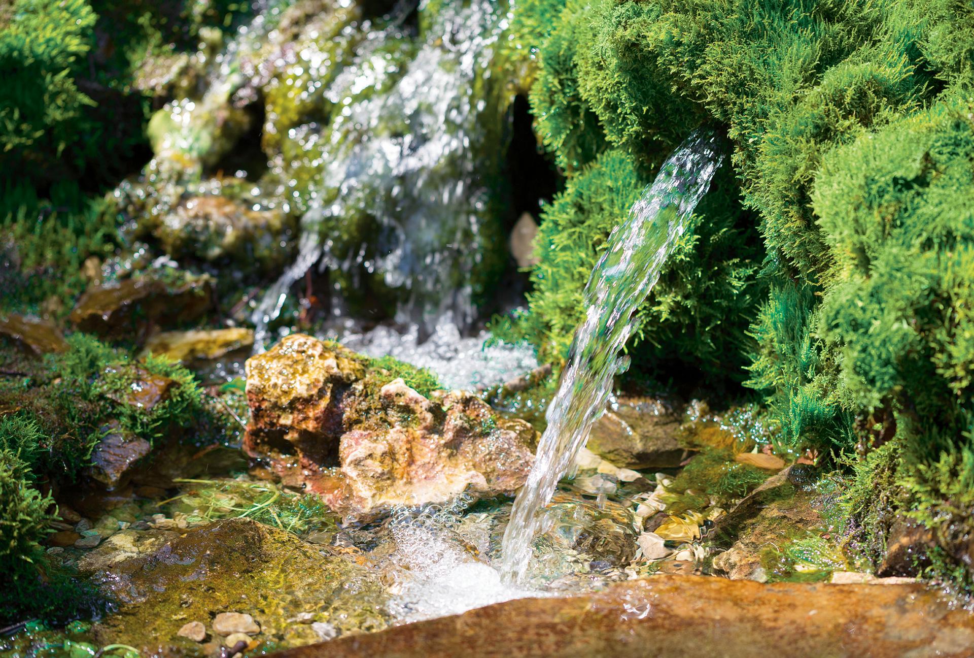 Reines Quellwasser Wildalp Austria