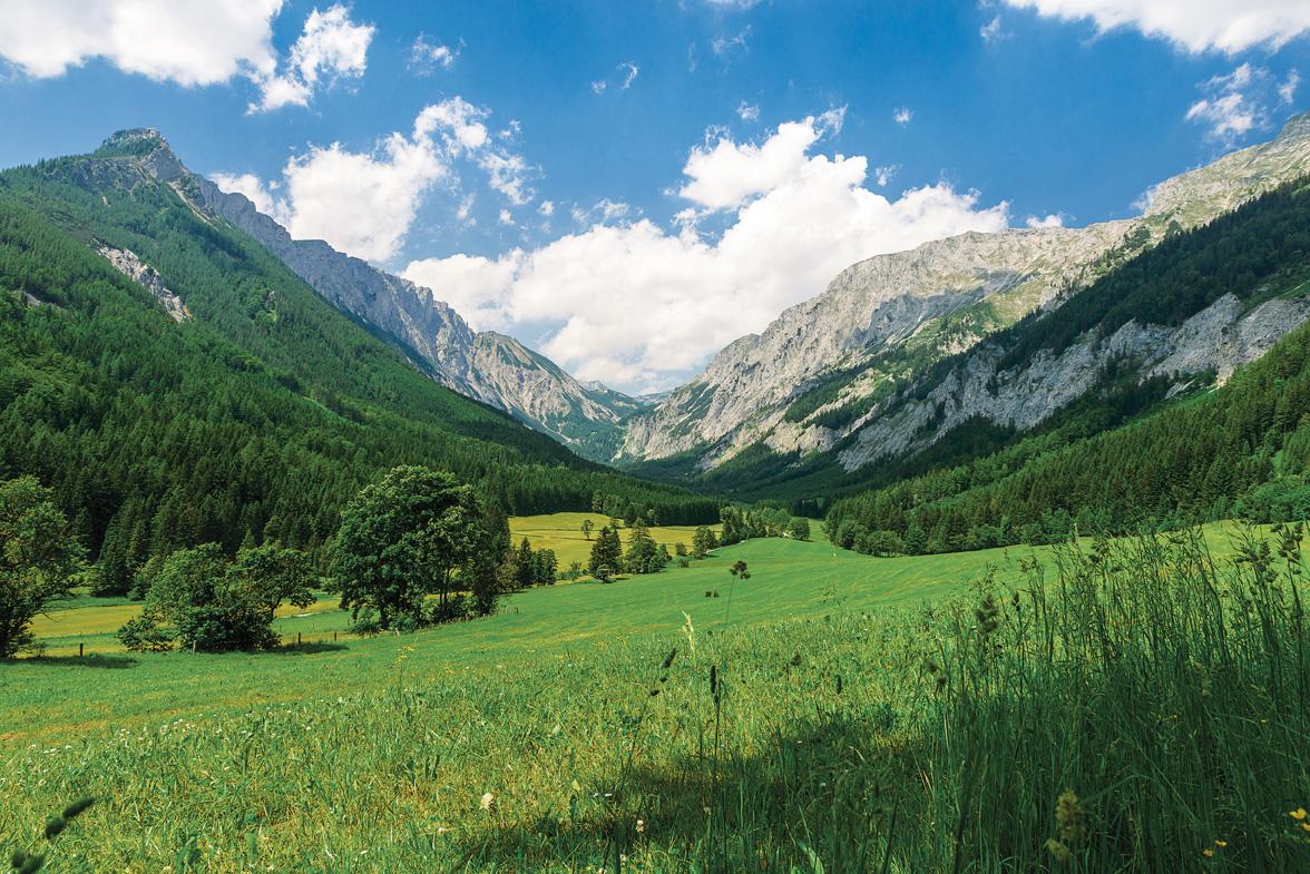 Wildalp Wasser aus den Alpen